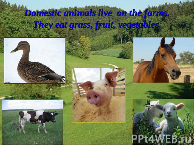 Domestic animals live on the farms.They eat grass, fruit, vegetables.