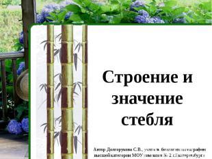 Строение и значение стебля Автор Долгорукова С.В., учитель биологии и географии