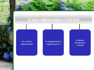 Классификация стеблей по степени одревеснения по направлению и характеру роста п
