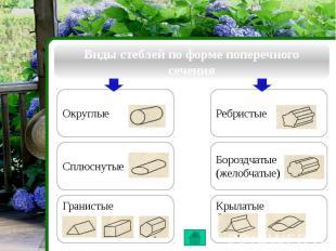 Виды стеблей по форме поперечного сечения