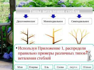 Типы ветвления стебля Используя Приложение 1, распредели правильно примеры разли