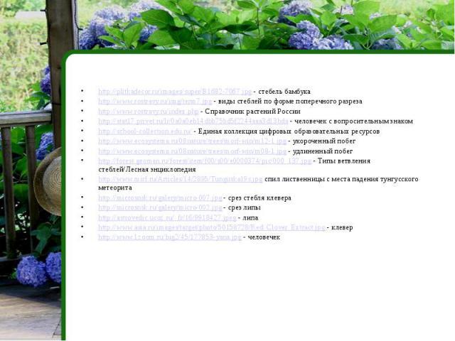http://plitkadecor.ru/images/super/B1682-7067.jpg - стебель бамбукаhttp://www.rostravy.ru/img/term7.jpg - виды стеблей по форме поперечного разрезаhttp://www.rostravy.ru/index.php - Справочник растений Россииhttp://stat17.privet.ru/lr/0a0a0eb14dbb75…