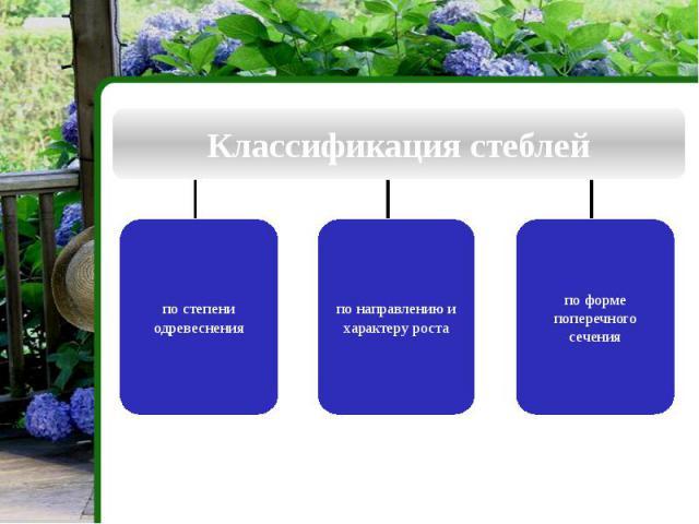 Классификация стеблей по степени одревеснения по направлению и характеру роста по форме поперечного сечения