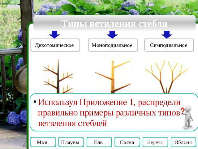Типы ветвления стебля Используя Приложение 1, распредели правильно примеры различных типов ветвления стеблей