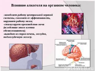 Влияние алкоголя на организм человека: -замедляет работу центральной нервной сис