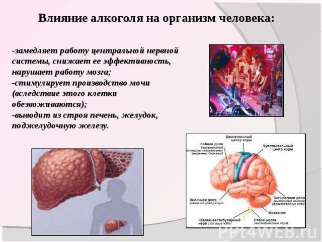 Влияние алкоголя на организм человека: -замедляет работу центральной нервной системы, снижает ее эффективность, нарушает работу мозга;-стимулирует производство мочи (вследствие этого клетки обезвоживаются); -выводит из строя печень, желудок, поджелу…