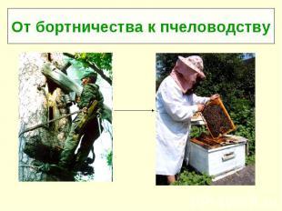 От бортничества к пчеловодству