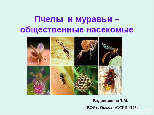 Пчелы и муравьи – общественные насекомые Водопьянова Т.М. БОУ г. Омска «СОШ№142»