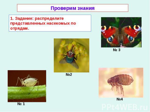 Проверим знания 1. Задание: распределите представленных насекомых по отрядам.