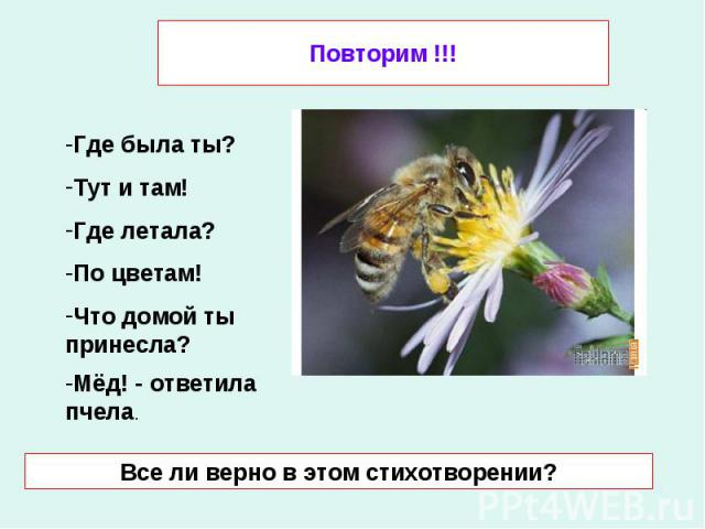Повторим !!! Где была ты?Тут и там! Где летала?По цветам! Что домой ты принесла?Мёд! - ответила пчела. Все ли верно в этом стихотворении?