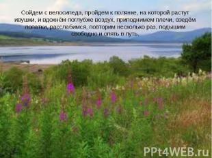 Сойдем с велосипеда, пройдем к полянке, на которой растут ивушки, и вдохнём погл
