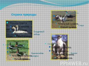 Охрана природы Тундровый лебедь Краснозобая казарка Стерх Кречет