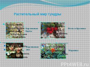 Растительный мир тундры Карликовая берёза Карликоваяива Ягель и брусника Морошка