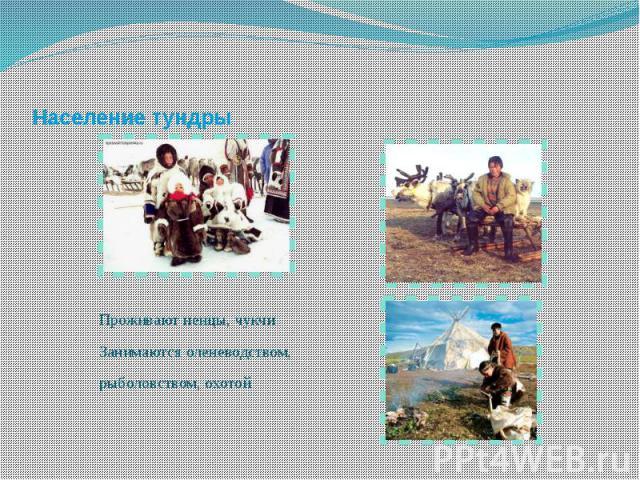 Население тундры Проживают ненцы, чукчиЗанимаются оленеводством, рыболовством, охотой