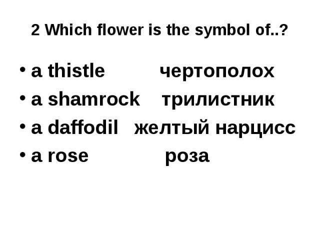 2 Which flower is the symbol of..? a thistle чертополох a shamrock трилистникa daffodil желтый нарциссa rose роза