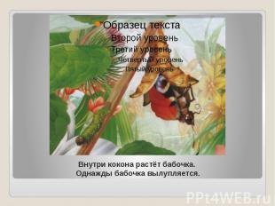 Внутри кокона растёт бабочка. Однажды бабочка вылупляется.