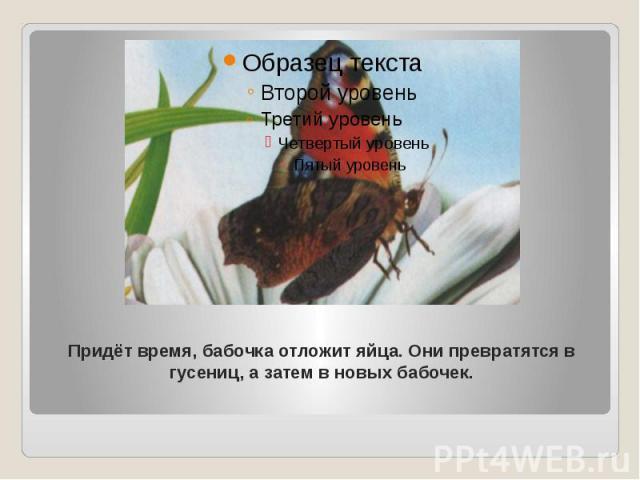 Придёт время, бабочка отложит яйца. Они превратятся в гусениц, а затем в новых бабочек.