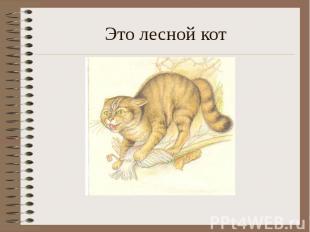 Это лесной кот