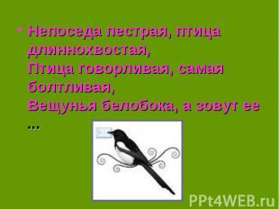 Непоседа пестрая, птица длиннохвостая,Птица говорливая, самая болтливая,Вещунья