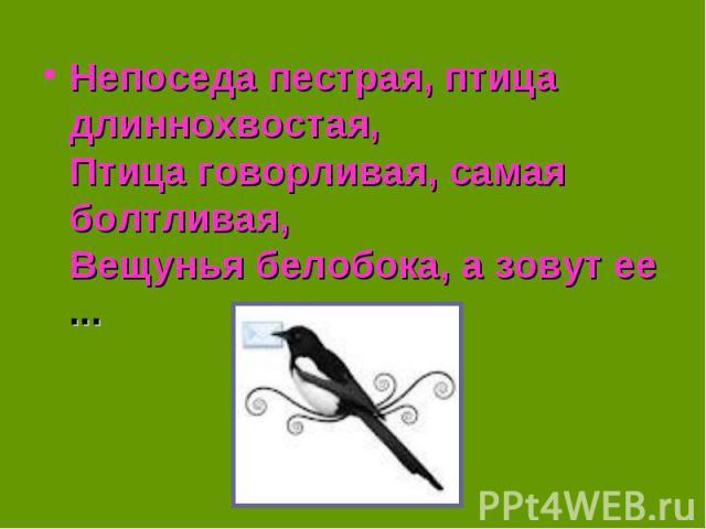 Непоседа пестрая, птица длиннохвостая,Птица говорливая, самая болтливая,Вещунья белобока, а зовут ее ...