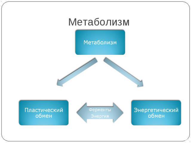Метаболизм Метаболизм Энергетический обмен Пластический обмен