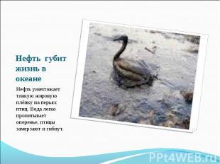 Нефть губит жизнь в океане Нефть уничтожает тонкую жировую плёнку на перьях птиц