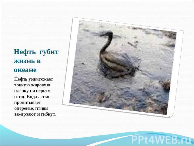 Нефть губит жизнь в океане Нефть уничтожает тонкую жировую плёнку на перьях птиц. Вода легко пропитывает оперенье, птицы замерзают и гибнут.