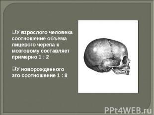 У взрослого человека соотношение объема лицевого черепа к мозговому составляет п