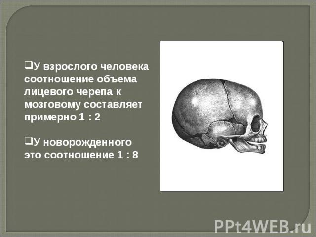 У взрослого человека соотношение объема лицевого черепа к мозговому составляет примерно 1 : 2 У новорожденного это соотношение 1 : 8