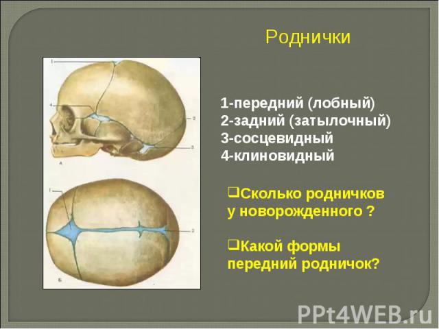 Роднички 1-передний (лобный)2-задний (затылочный)3-сосцевидный4-клиновидный Сколько родничков у новорожденного ?Какой формы передний родничок?