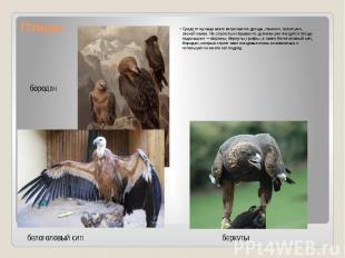Птицы Среди птиц чаще всего встречаются дрозды, пеночки, трясогузки, лесной каню