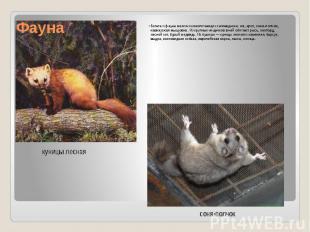 Фауна Богата и фауна мелких млекопитающих заповедника:еж, крот, соня-полчок, ка