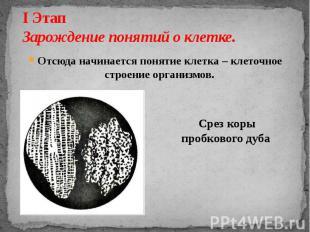 I Этап Зарождение понятий о клетке. Отсюда начинается понятие клетка – клеточное