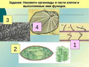 Задание: Назовите органоиды и части клетки и выполняемые ими функции.