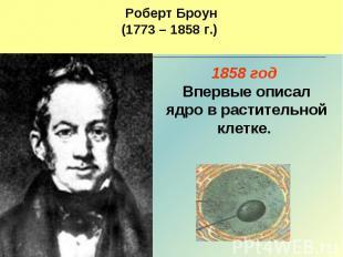 Роберт Броун(1773 – 1858 г.) 1858 год Впервые описал ядро в растительной клетке.