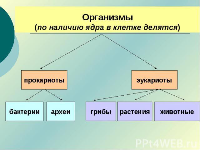 Организмы(по наличию ядра в клетке делятся)