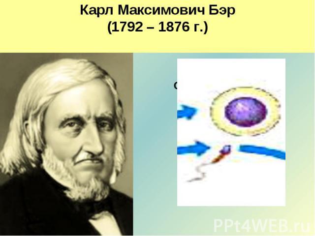 Карл Максимович Бэр(1792 – 1876 г.)