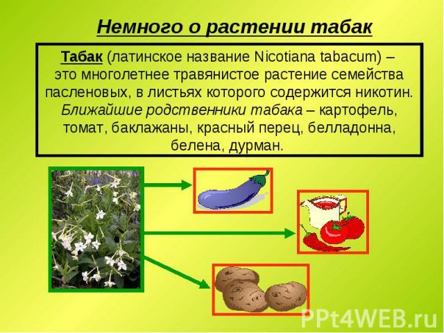 Табак (латинское название Nicotiana tabacum) – это многолетнее травянистое растение семейства пасленовых, в листьях которого содержится никотин. Ближайшие родственники табака – картофель, томат, баклажаны, красный перец, белладонна, белена, дурман.