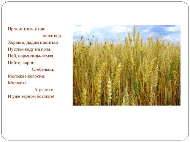 Просит пить у нас пшеница,Хорошо, дадим напиться:Пустим воду на поля,Пей, кормилица-земля.Пейте, корни, Стебельки,Молодые колоски.Молодые, А усатыеИ уже зерном богатые!
