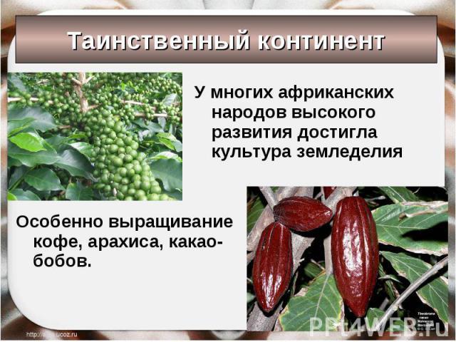 Таинственный континент У многих африканских народов высокого развития достигла культура земледелия Особенно выращивание кофе, арахиса, какао-бобов.