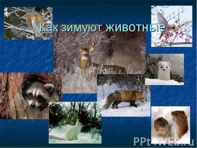 Как зимуют животные