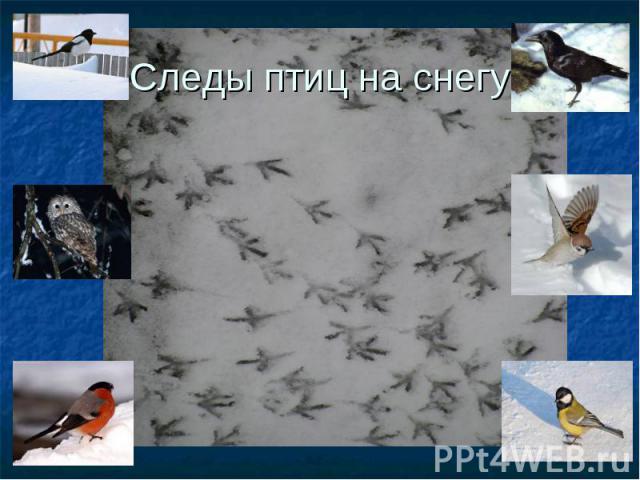 Следы птиц на снегу
