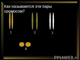 Как называются эти пары хромосом?