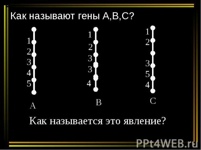 Как называют гены А,В,С? Как называется это явление?