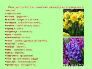 Язык цветов дает возможность выражать свои намерения и чувства. Опорные слова:Аз