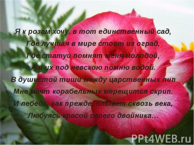 Я к розам хочу, в тот единственный сад,Где лучшая в мире стоит из оград,Где статуи помнят меня молодой,А я их под невскою помню водой.В душистой тиши между царственных липМне мачт корабельных мерещится скрип.И лебедь, как прежде, плывет сквозь века,…