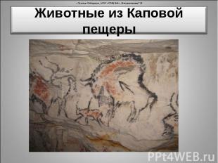 Животные из Каповой пещеры