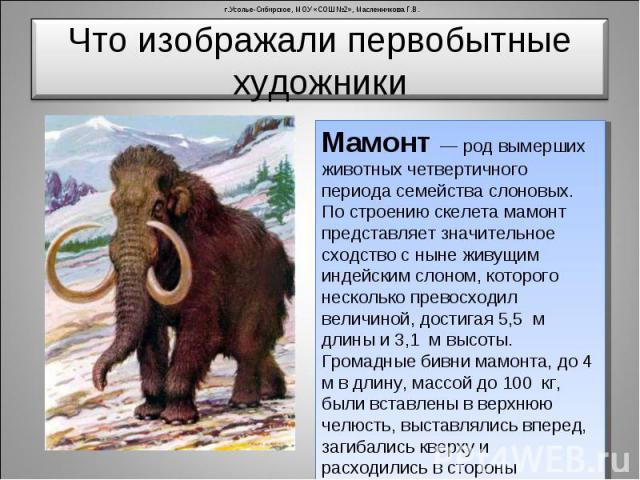 Что изображали первобытные художники Мамонт — род вымерших животных четвертичного периода семейства слоновых. По строению скелета мамонт представляет значительное сходство с ныне живущим индейским слоном, которого несколько превосходил величиной, до…
