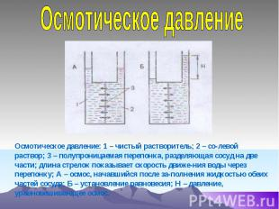 Осмотическое давление Осмотическое давление: 1 – чистый растворитель; 2 – со-лев