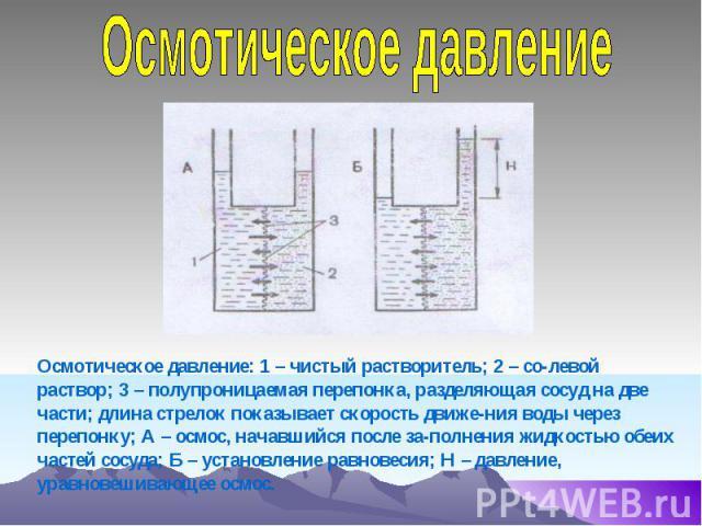 Осмотическое давление Осмотическое давление: 1 – чистый растворитель; 2 – со-левой раствор; 3 – полупроницаемая перепонка, разделяющая сосуд на две части; длина стрелок показывает скорость движе-ния воды через перепонку; А – осмос, начавшийся после …